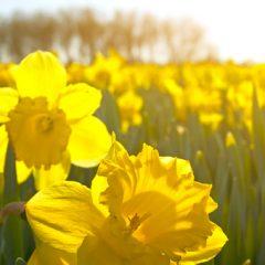 Spring Equinox Detox