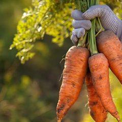 Celebrate Organic Month
